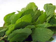 Fresh mint leaves make the tastiest mint punch.