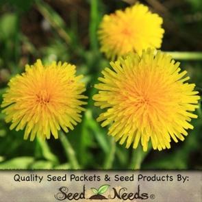 seedneeds-dandelion