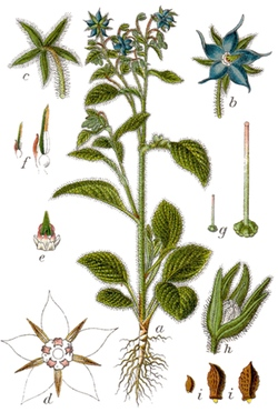 borage-lifecycle