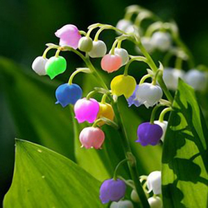fake photo of colorful lily of the valley plant